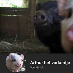 Arthur het varkentje
